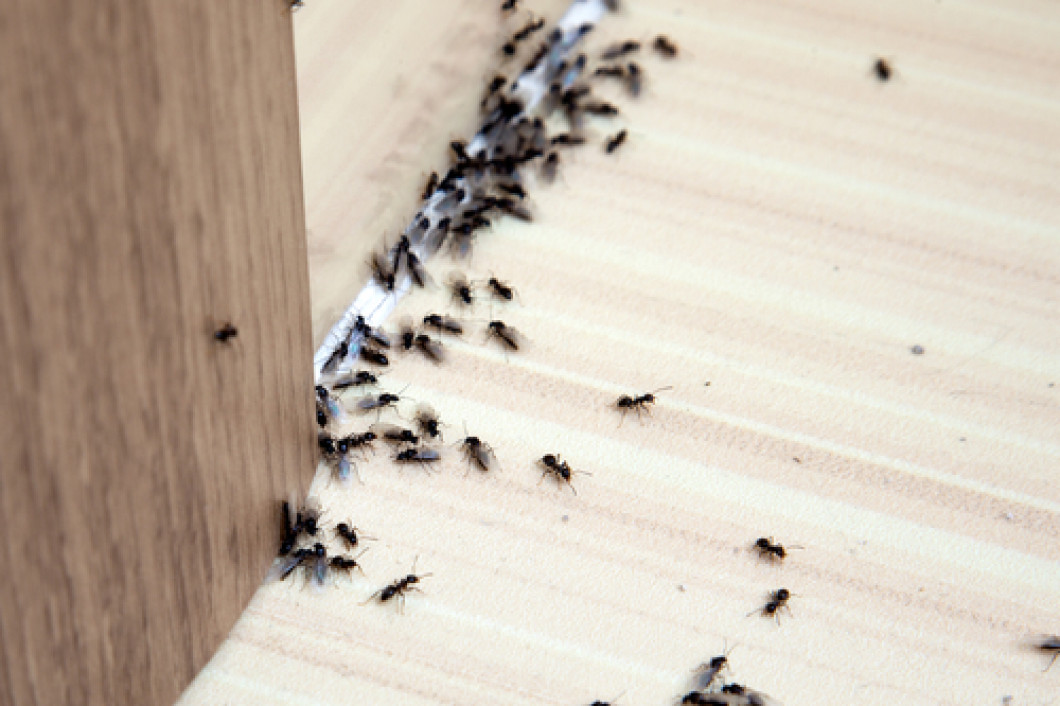 Are ants taking over your Oxford, Conyers & Snellville, GA homes?