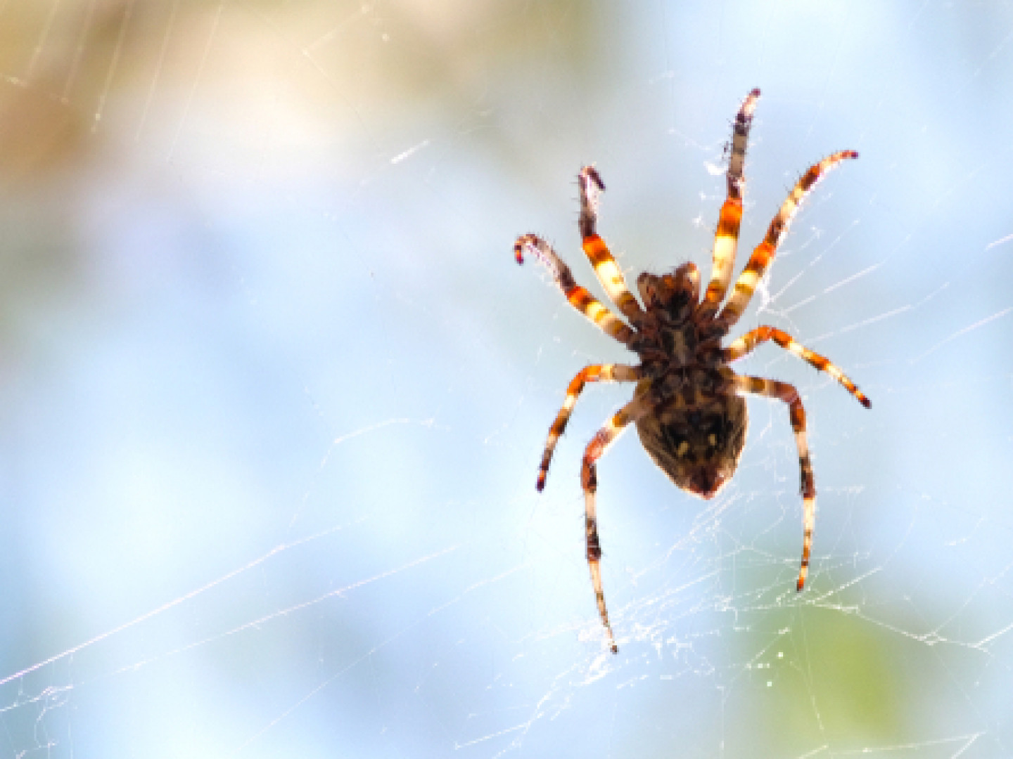 Get Fast Spider Removal Services